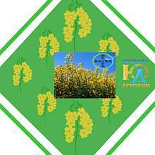 Семена рапса производства Bayer