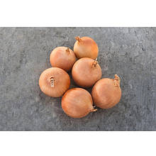 Семена лука репчатого Седона F1 (250 000 сем.) Bejo