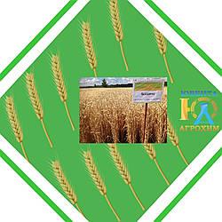 Семена озимой пшеницы Богдана (Элита)