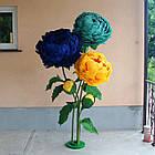 Ростовые, интерьерные цветы, фото 3
