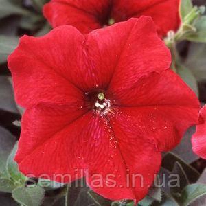 Семена петунии Ламбада F1, 100 сем. (драж.), красная мультифлора (многоцветковой)