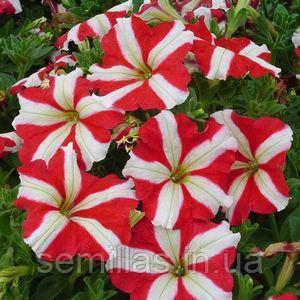 Семена петунии Ламбада F1, 100 сем. (драж.), красная звезда мультифлора (многоцветковой)