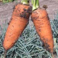 Семена средней моркови (от 100 до 120 дней)