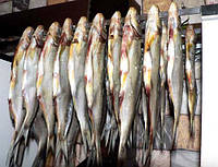 Рыба вяленная, лещ