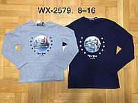 Реглан для мальчика оптом, F&D, 8-16 лет, арт. WX-2579, фото 1