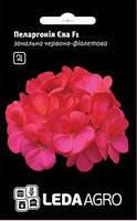 Семена пеларгонии Ева F1, 5 сем. (драже), красно-фиолетовая зональная зеленолистная