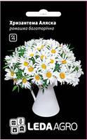 Семена хризантемы Аляска, 0,4 гр., ромашка многолетняя