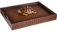 Лоток для документов Черепаха