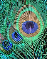 Схема для вышивки бисером Перо павлина