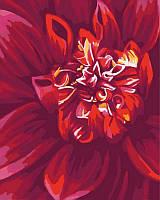 Картина по номерам Яркий георгин, 40x50 см