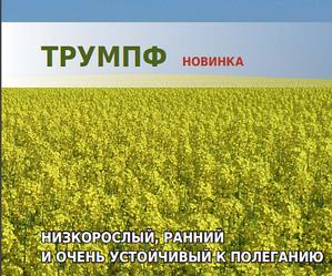 Семена озимого рапса Трумпф «Лембке» (Lembke)