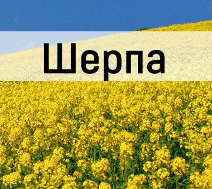 Семена озимого рапса Шерпа «Лембке» (Lembke)