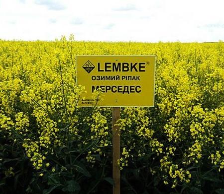 Мерседес Семена озимого рапса  «Лембке» (Lembke)