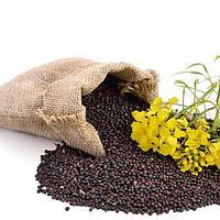 Рапс озимый Авентадор среднеранний линейный гибрид интенсивно типа, п.е. 2,2 млн семян на 4га