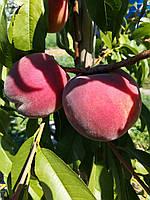 Плодоношение. Секреты стабильного урожая.