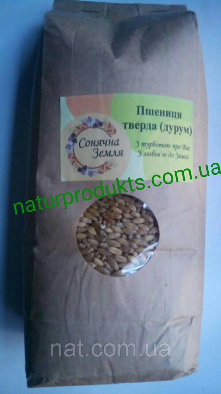 Пшеница для проращивания твердых сортов (Дурум), 1 кг. Вырещена без химикатов, удобрений и т.п.