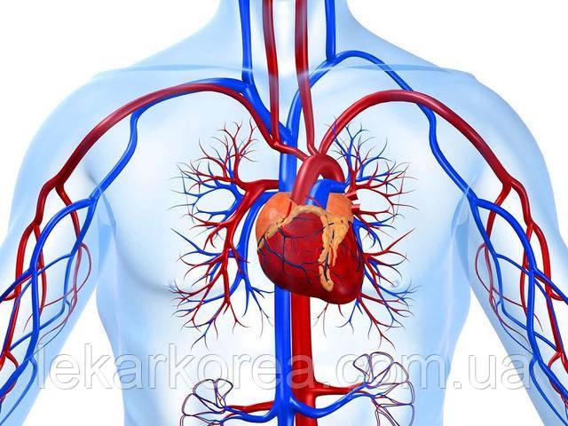 лечение сердечнососудистой системы