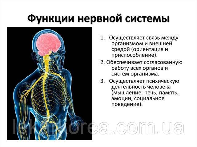 лечить нервную систему