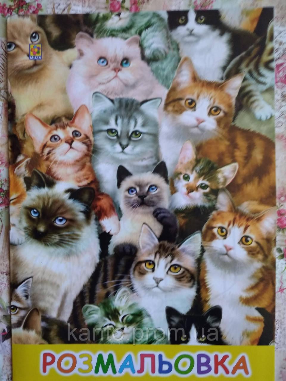Раскраска A4 8 стр., Кошки