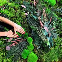 Картина из мха и растений