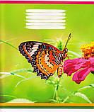 """Тетради школьные 12 л. косая линия """"Флора и фауна"""" 411, фото 4"""