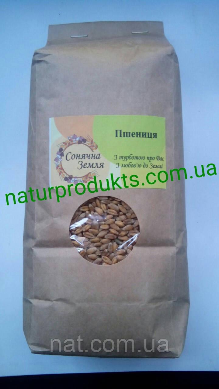 Пшеница для проращивания, 1 кг (выращена без агрохимии)