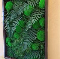 Картина из мха и растений.