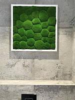 Картина из мха кочки 50/50 см