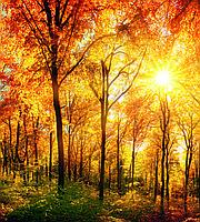 Фотообои флизелиновые 3D Пейзаж 225х250 см Солнечный лес (MS-3-0067)