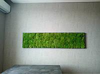 Послуги з озеленення житлових приміщеннях