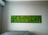 Услуги по озеленению в жилых помещениях