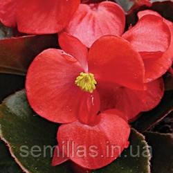 Семена Бегонии Броумов F1, 1000 сем. (драж.), красной вечноцветущей краснолистной