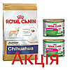 Роял Канін Чихуахуа юніор Royal Canin Chihuahua Junior сухий корм для цуценят 1,5 кг + 2 консерви