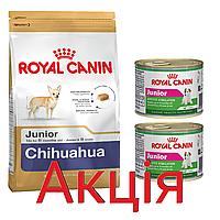 Роял Канін Чихуахуа юніор Royal Canin Chihuahua Junior сухий корм для цуценят 1,5 кг + 2 консерви