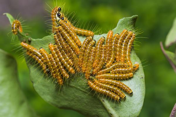 Инсектициды от вредителей для защиты растений купить