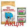 Роял Канін Мопс Юніор Royal Canin Pug junior сухий корм для цуценят собак 1.5 кг + 2 консерви