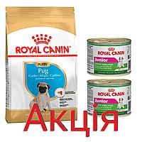Роял Канін Мопс Юніор Royal Canin Pug junior сухий корм для цуценят собак 1.5 кг + 2 консерви