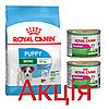 Роял Канін Міні Паппі (Юніор) Royal Canin Mini Puppy сухий корм для цуценят дрібних порід 2 кг + 2 консерви