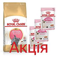 Роял Канін Британських Кіттен Royal Canin British kitten сухий корм для кошенят 2 кг + 3 паучи