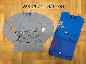Регланы для мальчиков опт  F&D, 95% хлопок, размеры 3/4-7/8 лет, арт. WX-2571