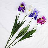 Цветы петушки гребешки, ирисы 70 см( 4 шт. в уп), фото 2
