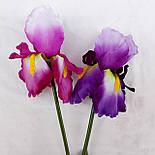 Цветы петушки гребешки, ирисы 70 см( 4 шт. в уп), фото 3