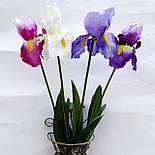 Цветы петушки гребешки, ирисы 70 см( 4 шт. в уп), фото 4