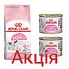 Роял Канін Мазе Енд Бебікет Royal Canin Mother Babycat сухий корм для годуючих кішок і кошенят 2кг +2 консерви