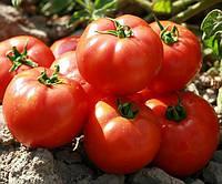 Насiння томату детермінантний для відкритого ґрунту Садін F1 500 нас. Enza Zaden