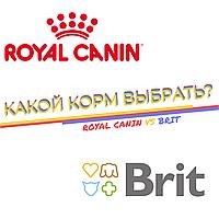 Какой корм выбрать: Royal Canin или Brit?