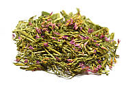 Золототысячник обыкновенный трава, фото 1