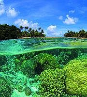 Фотообои флизелиновые 3D Море 225х250 см Коралловый риф (MS-3-0200)