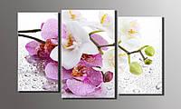 """Модульная картина  """"Орхидеи на стекле"""" 54х89 см"""