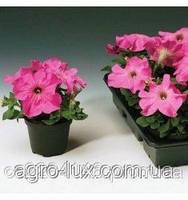 Семена петунии крупноцветковой Лимбо розовая с прожилками  F1 1000 шт.